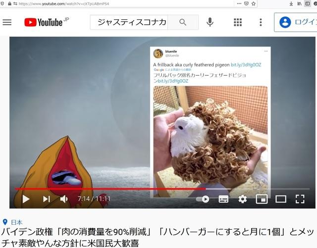 Deformed_pigeons_20.jpg