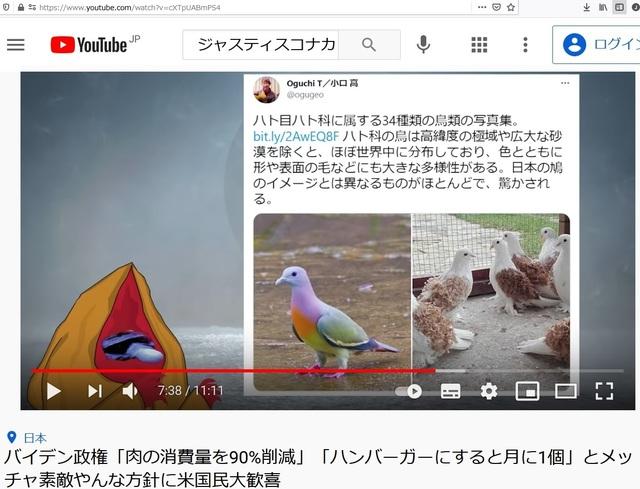 Deformed_pigeons_21.jpg