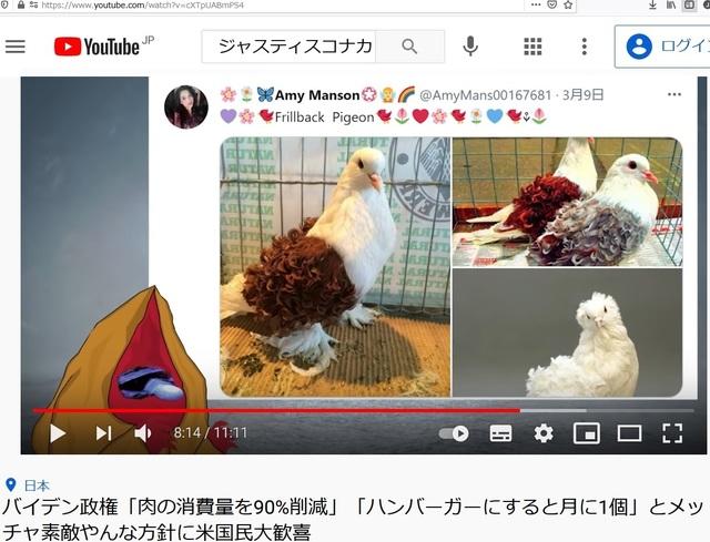Deformed_pigeons_22.jpg